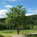 Mitten im Grün des Naturparks